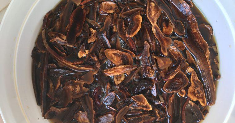 NBK, NAMBUKA fermento con base kombucha di FUNGO REISHI o GANODERMA