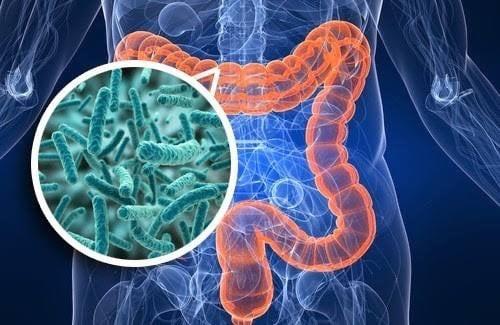 L' IMPORTANZA DI AVERE UN MICROBIOTA IN EQUILIBRIO